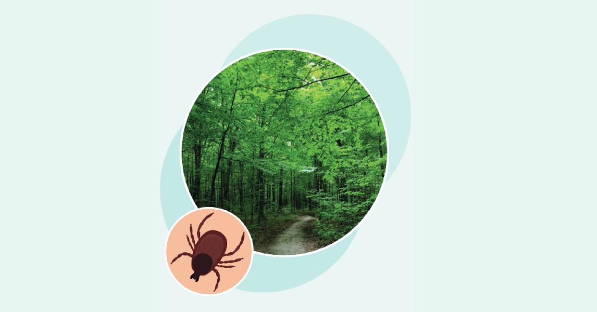 Maladie de Lyme et prévention des piqûres de tiques